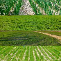 بیش از ۶٧ هزار هکتار از اراضی مستعد در استان سیستان و بلوچستان به کاشت گندم و جو اختصاص یافت
