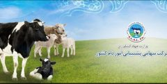 آمادگی شرکت پشتیبانی امور دام جهت خرید گوشت گوساله و مرغ