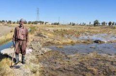   برای کشت پاییزه ١١٠ میلیون مترمکعب آب تحویل کشاورزان سیستانی شد