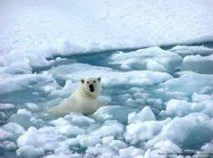 تصاویر : آب شدن یخهای قطب جنوب